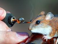 laska z ładną myszką