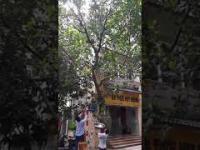 Zbieranie owoców w Wietnamie