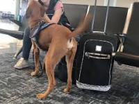 Wyszkolony pies reaguje na zaniepokojenie właścicielki