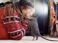Słitaśny szczur bawi się ze swoją panią