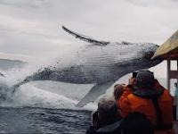 Wieloryb wyskakuje znikąd podczas zwiedzania