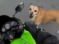 Zwierzęta vs Motocykliści 1 - Psy atakują Motocyklistów