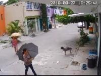 W Meksyku nawet psy są okradane
