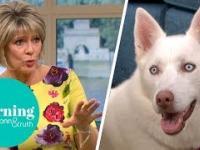 Pies zawstydził wegankę w programie telewizyjnym na żywo