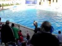 Wypadek z dzieckiem na pokazie delfinów - Egipt.