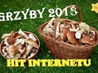 Grzyby Leśne 2018, Kolejny Wysyp Prawdziwków, Borowików Szlachetnych we Wrześniu