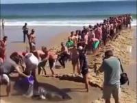 Plaża to nie miejsce dla rekina