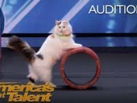 Tresowane koteły