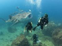 Dobry ziomek rekin wielorybi pozuje do zdjęcia