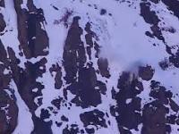 Pantera śnieżna vs kozica. Imponujący pokaz kociej sprawności