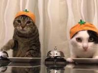 Koty Pawłowa