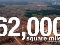 Problem z olejem palmowym jakiego nie znacie