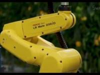 SWEEPER, robot zbierający paprykę