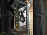 Wąż-robot z łatwością wspina się po drabinie.