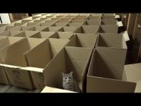 To tu koty trafiają po śmierci.