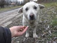 Ratowanie przestraszonego bezdomnego psa ze złamanym sercem