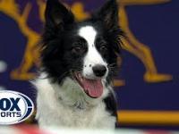 Rewelacyjny występ psa podczas konkursu agility!