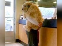 Zwierzęta Idą do weterynarza