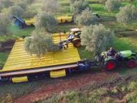 Zautomatyzowany zbiór oliwek