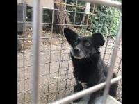 Wystraszony pies złapany w klatkę łapkę. Porzucony?