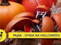 Pająk - dynia, czyli transformer na miarę Halloween