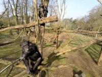 Małpa wkurzyła się na drona
