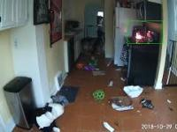 Pies włączył kuchenkę i prawie spalił dom