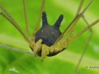Śmieszny pająk