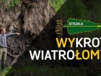 Wały, łomy i wykroty, czyli jak się trzymają drzewa - o Lesie 31