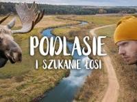 Gdzie chowają się łosie w Polsce? Poszukiwania na niesamowitym Podlasiu