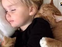 """Kot i jego """"rodzeństwo"""""""