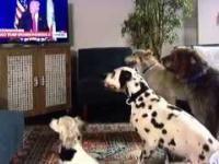 Donald Trump usadza psy