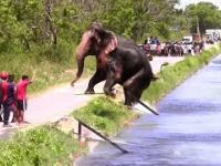 Tłum ratuje słonia czym popadnie