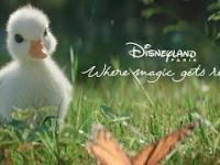 Disney właśnie opublikował swoją najlepszą tegoroczną animację