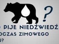 Co pije niedźwiedź podczas zimowego snu?