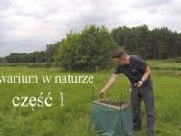 Akwarium zakładane w naturze - polska rzeka Piława