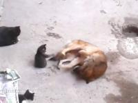 Kotka pokazuje dzieciom dawnego znajomego