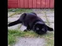 Kotek zobaczył coś upiornego