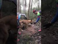 Ktoś zostawił psa na śmierć w środku lasu