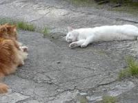Poobiednia sjesta kotów