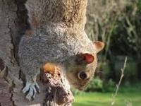 Wiewiórka w na drzewie w parku