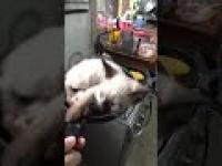 Kotek, który sam prosi się o przyrządzenie