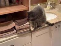 Kot układa ręczniki po swojemu
