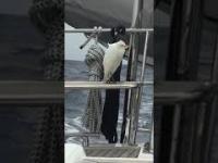Ptak kołysze się na łodzi