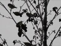 Zima ptaszków