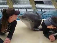 Dwie dziewczyny, jeden delfin
