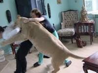 Dziki kot wychowywany w mieszkaniu