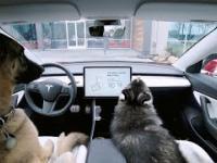 Psy zamknięte w samochodzie podczas upału? Tesla wprowadza