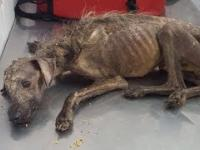 Rescued Street Dog - Unbelievable Transformation