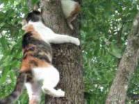 Kociak wlazł na drzewo i matka musiała go ratować
